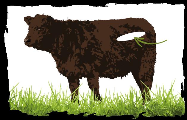Abbildung welche Schicht für Filet-Fleisch