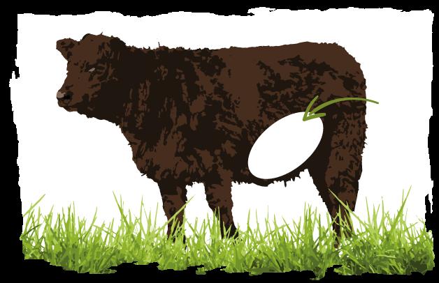 Abbildung welche Schicht für Gulasch-Fleisch