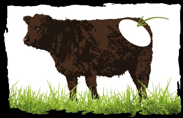 Abbildung welche Schicht für Hüftsteak-Fleisch