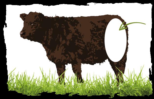 Abbildung welche Schicht für Rouladen und Braten-Fleisch