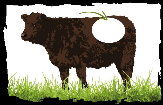 Abbildung welche Schicht für Rumpsteak-Fleisch