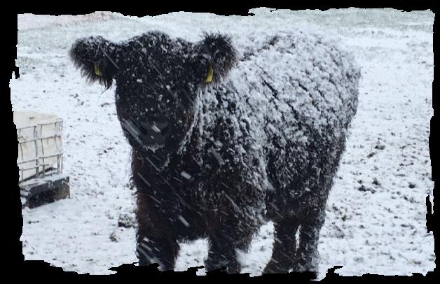 Newsbild zum Wintereinbruch