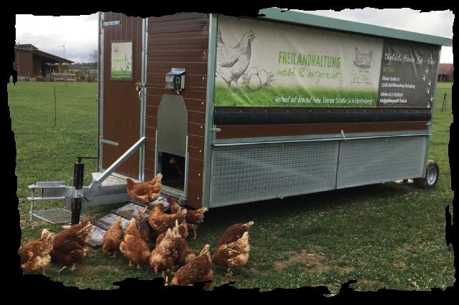 Newsbild zum Hühnermobil