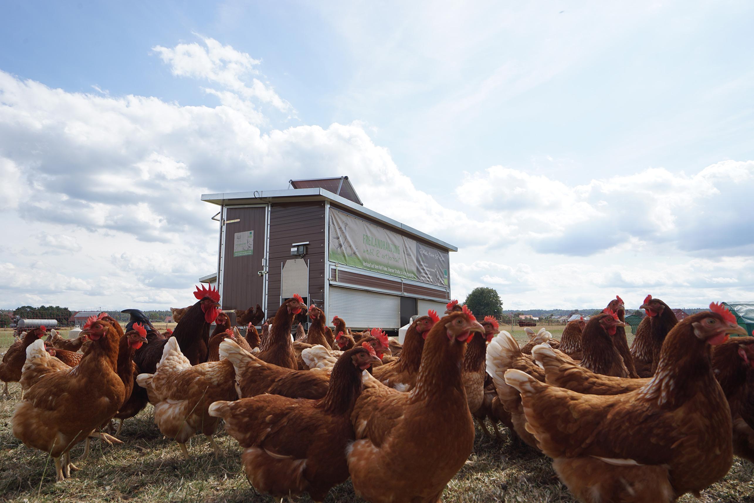 Hühnermobil mit Hühner (Biohof Finke)