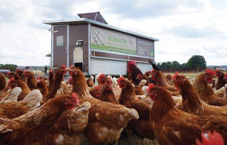 Hühnermobil und Hühner vom Hof Finke
